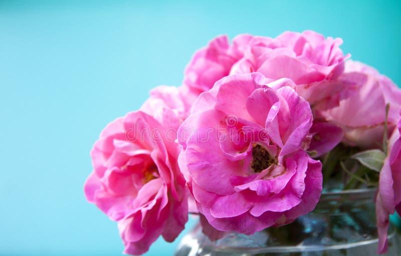Menchii róży bukiet na kolorowym błękitnym tle obrazy stock