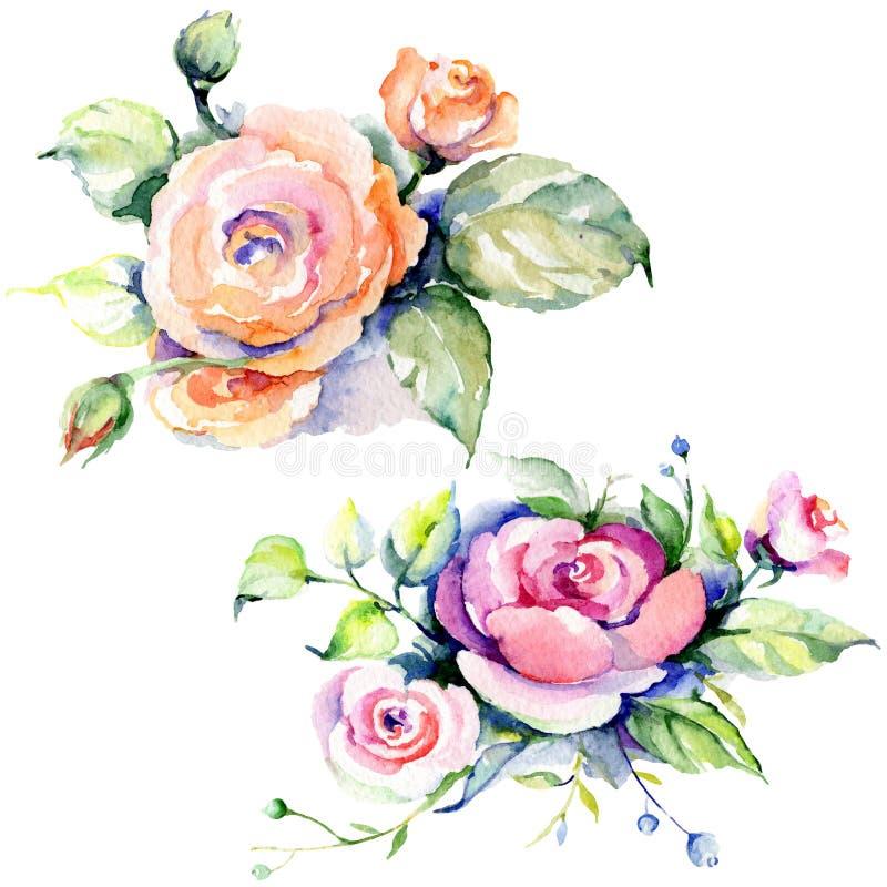 Menchii róży bukieta loral botaniczni kwiaty t?a bazy projekta ustalona akwarela Odosobniony bukiet ilustracji element royalty ilustracja