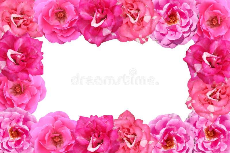 Menchii róży kwiatu rama na białym tle zdjęcia stock