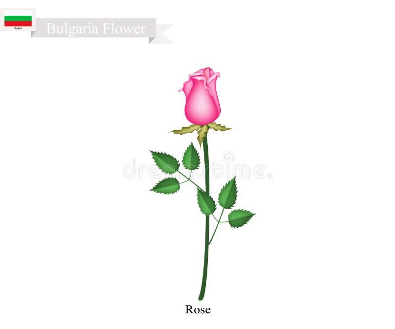 Menchii róży kwiaty Krajowy kwiat Bułgaria royalty ilustracja