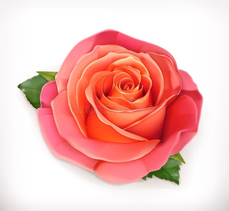 Menchii róży wektoru ilustracja ilustracji
