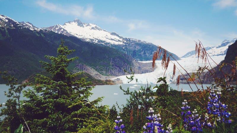 Mendenhall glaciär, Juneau, Alaska royaltyfri bild