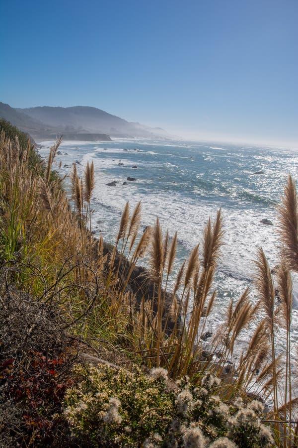 Mendocino County Coastal Headlands. Pampas Grass and headlands along the Mendocino County coast in northern California stock image
