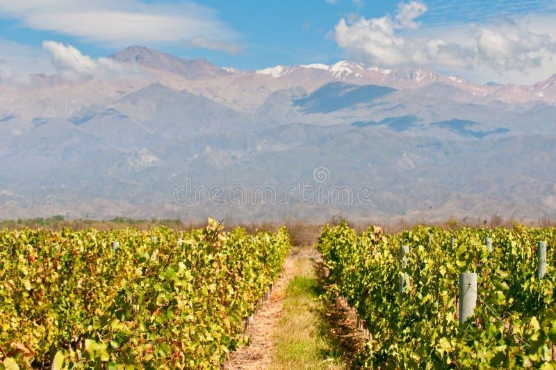 Mendoza葡萄园,阿根廷 免版税库存图片