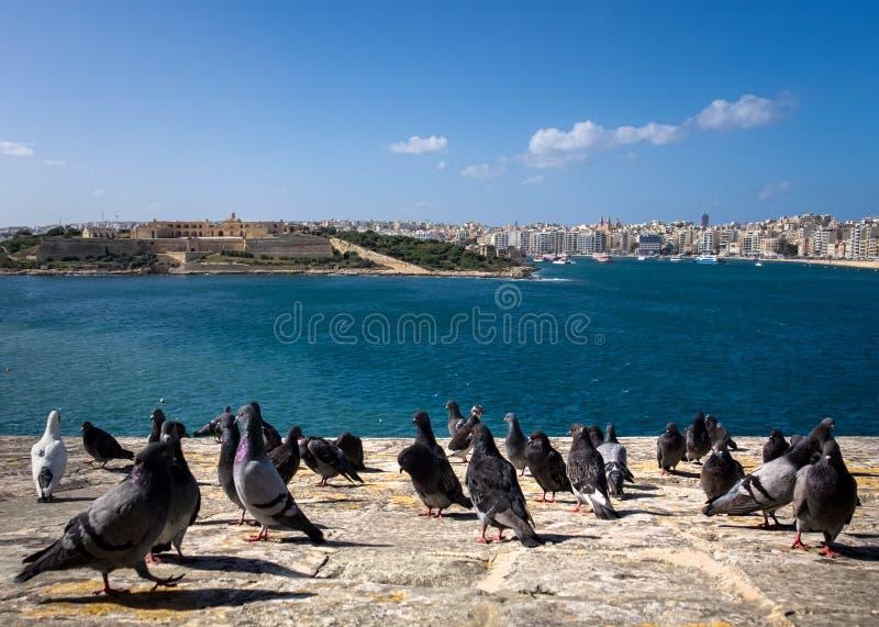 Menge auf der Ufergegend tauben valletta Birgu Kalkara Bormla Die Insel von Malta lizenzfreie stockfotografie