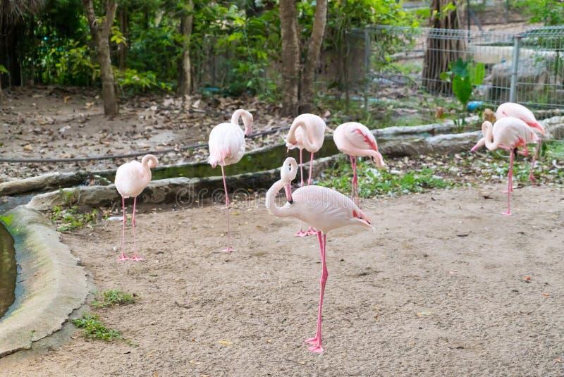 Menge des rosa Flamingos lizenzfreies stockbild