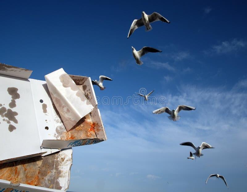 Menge von den Seemöwen, die warten, um auf den Schnellimbiß einzuziehen weggeworfen auf eine seside Stadtseeseite stockbilder