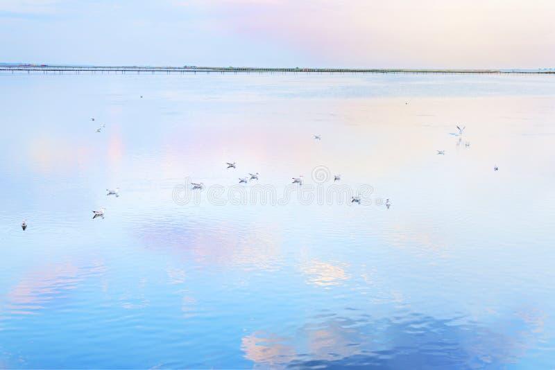 Menge von den weißen Seemöwen, die auf die Oberfläche und die Welle des blauen Meerwassers kühlen und schwimmen Bunte Wolkenrefle stockbild