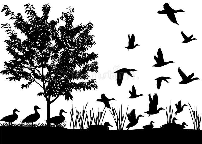 Menge von Enten lizenzfreie abbildung