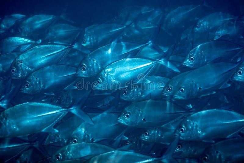 Menge von Fischen unter Wasser stockbilder