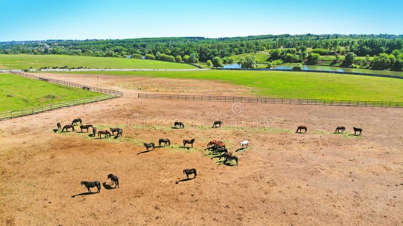 Menge von Pferden in einer Hürde aerial stockfoto
