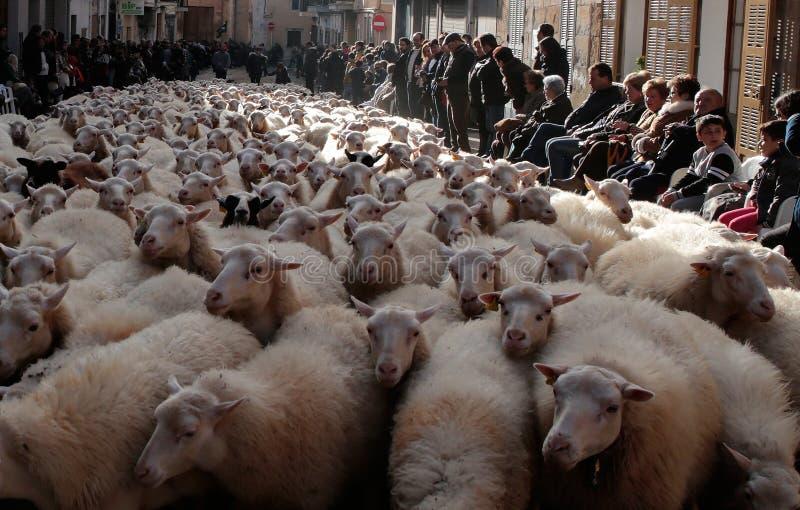 Menge von Schafen an St- Anthonytieren, die Tag segnen stockbilder
