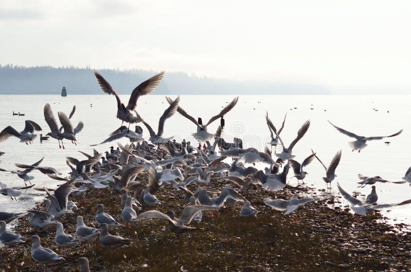 Menge von Seemöwen auf einem Spucken stockfotografie