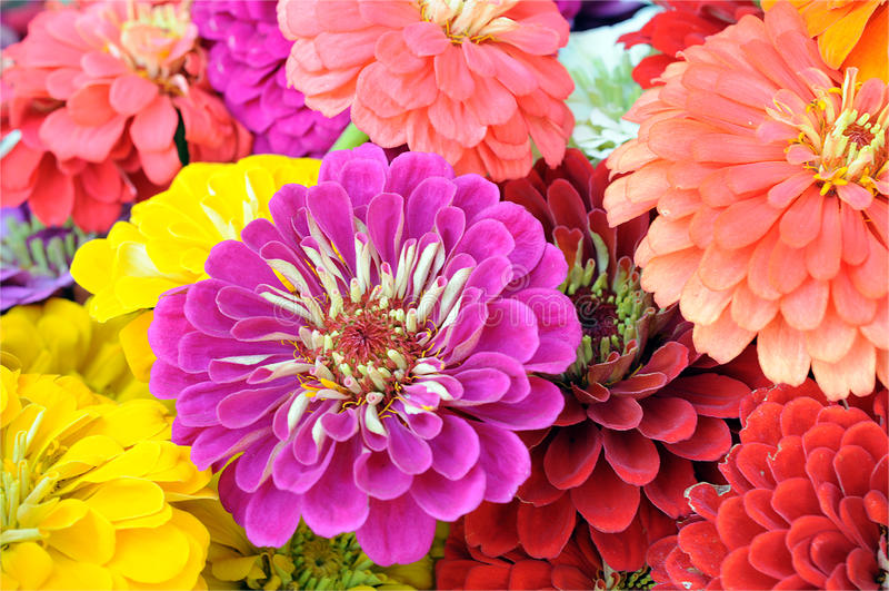 Download Mengeling van bloem stock foto. Afbeelding bestaande uit kleur - 29511158