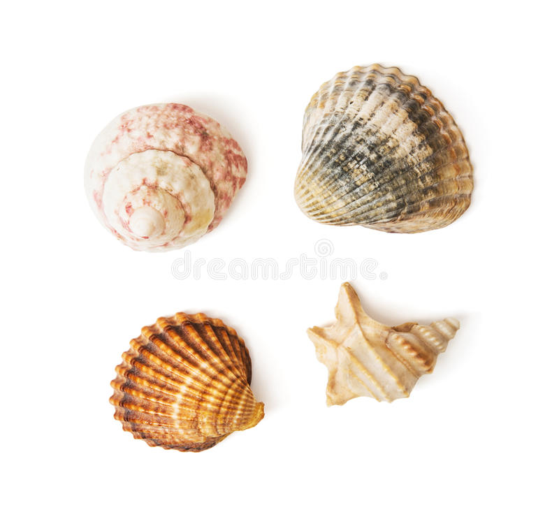 Mengeling van overzeese shells stock foto's