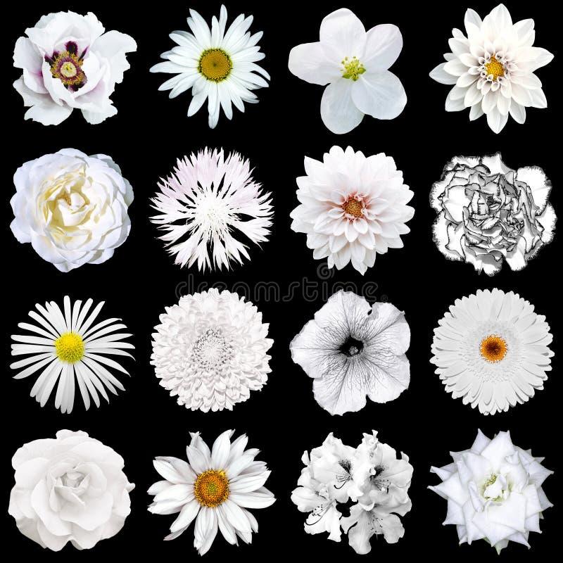 Mengelingscollage van natuurlijke en surreal witte bloemen 16 in 1 stock foto