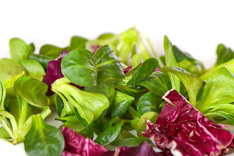 Mengelingssalade met spinazie, op witte achtergrond wordt geïsoleerd die royalty-vrije stock foto