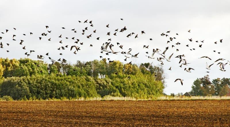 Download Menigte van vogels. stock afbeelding. Afbeelding bestaande uit zeemeeuw - 23144821