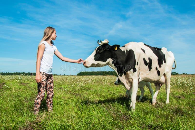 A menina é importa-se uma vaca em um campo fotografia de stock royalty free