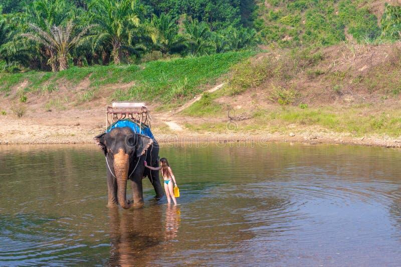A menina adolescente lava um elefante com uma escova a menina com o elefante na água um elefante está nadando com uma menina fotografia de stock