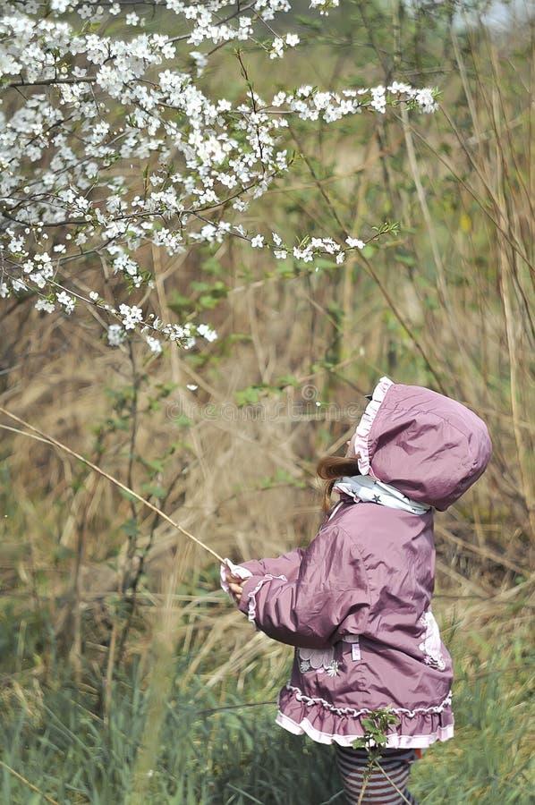 Menina adorável no jardim de florescência da cereja no dia de mola bonito imagem de stock royalty free