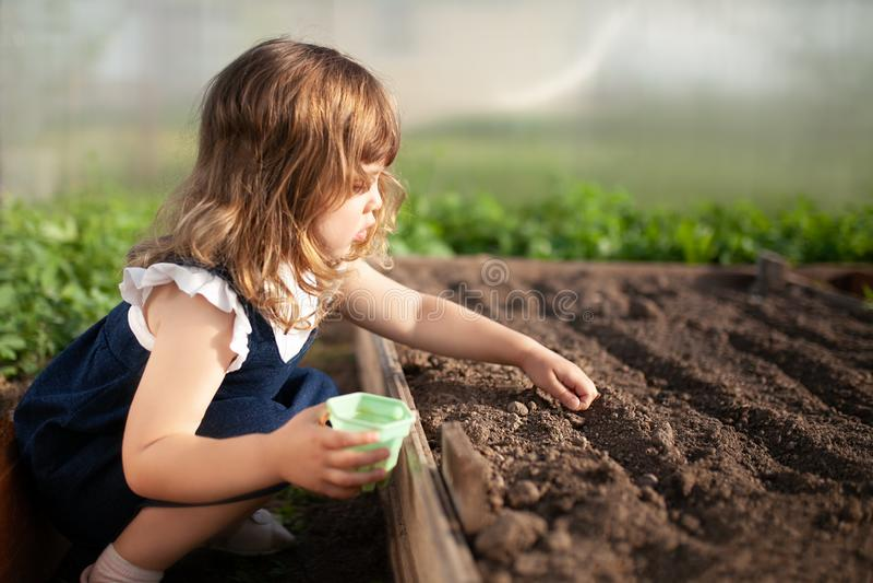 Menina adorável que planta sementes na terra na estufa imagem de stock