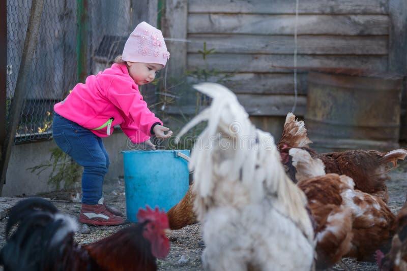 A menina alimenta galinhas na capoeira de galinha fotos de stock