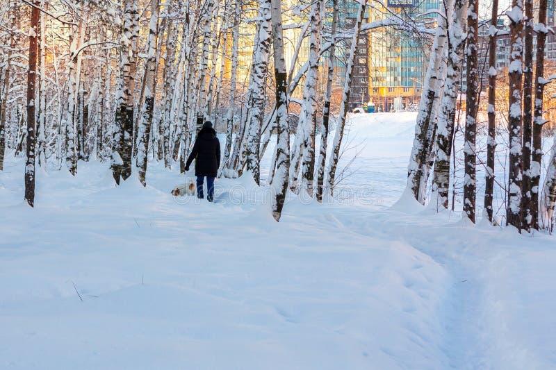 A menina anda com um cão em um parque coberto de neve da cidade do inverno foto de stock royalty free