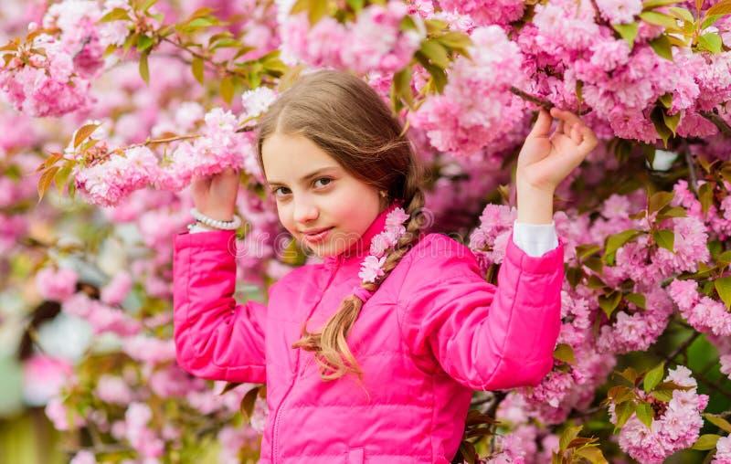 A menina aprecia a mola Crian?a em flores cor-de-rosa do fundo da ?rvore de sakura Crian?a que aprecia a flor de cerejeira cor-de foto de stock royalty free