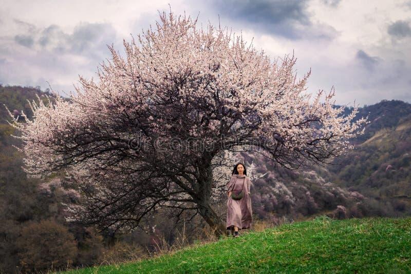 A menina asiática anda na primavera fora através de um campo verde sob a coroa de uma árvore de abricó selvagem de florescência fotos de stock