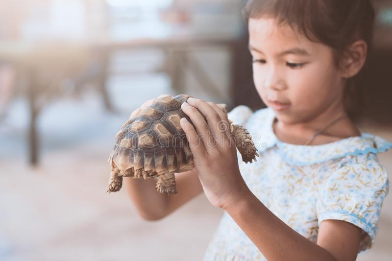 Menina asiática bonito da criança que guarda e que joga com tartaruga imagem de stock royalty free