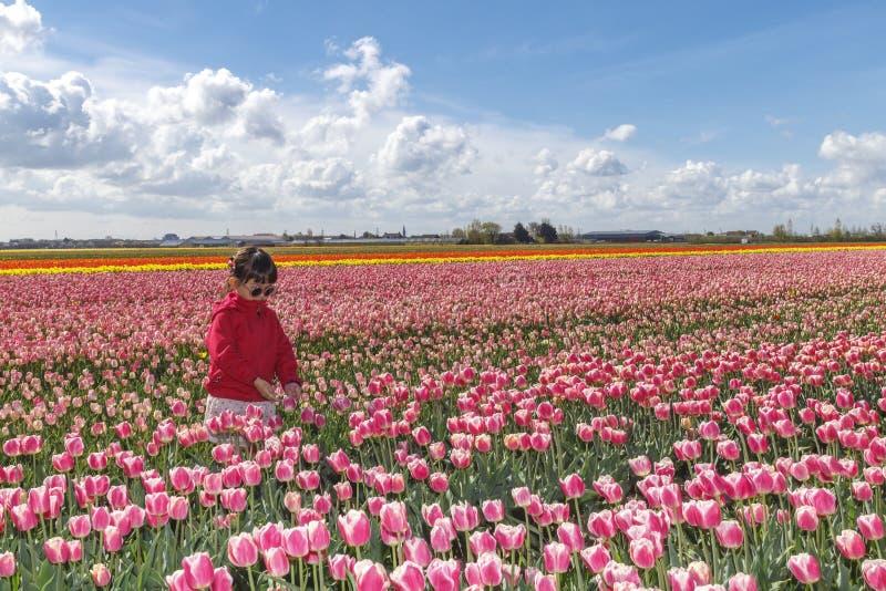 Menina asiática pequena na exploração agrícola das tulipas fotografia de stock