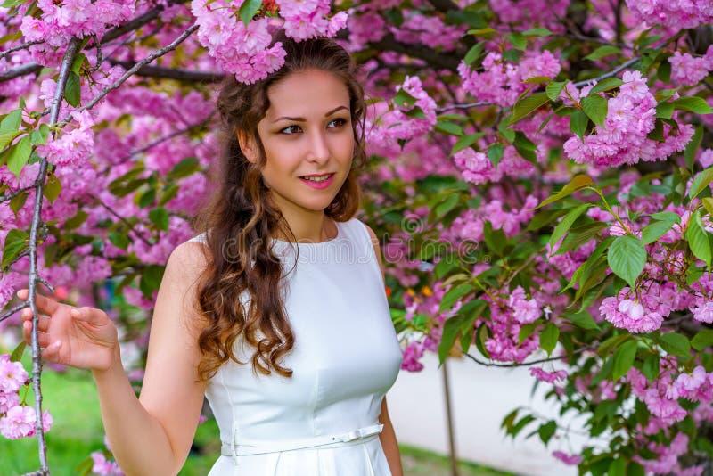 A menina atrativa com cabelo encaracolado no vestido branco está andando no jardim de sakura da flor entre flores cor-de-rosa imagens de stock