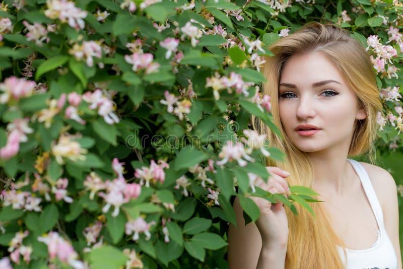 Menina bonita bonita com cabelo louro longo que aprecia o rosebush de florescência próximo da natureza em um t-shirt branco com v foto de stock