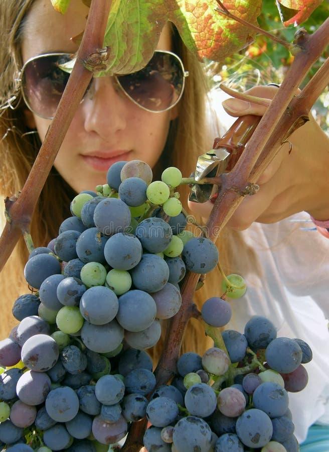 A menina bonita com óculos de sol escolheu uvas fotos de stock