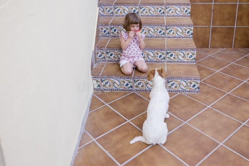 Menina bonita da criança que come a melancia com seu cão branco bonito pequeno Amor da família e ar livre do estilo de vida foto de stock royalty free