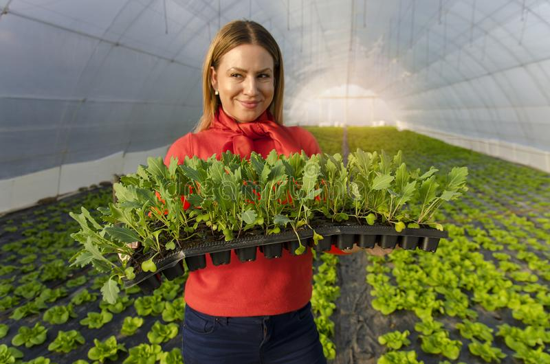 Menina bonita do fazendeiro que guarda plântulas nas mãos foto de stock royalty free