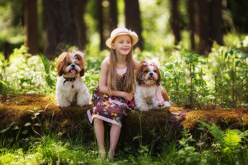 Menina bonita doce 7 anos de abraços velhos dois cães idênticos de Shih Tzu em um esclarecimento na floresta fotografia de stock royalty free
