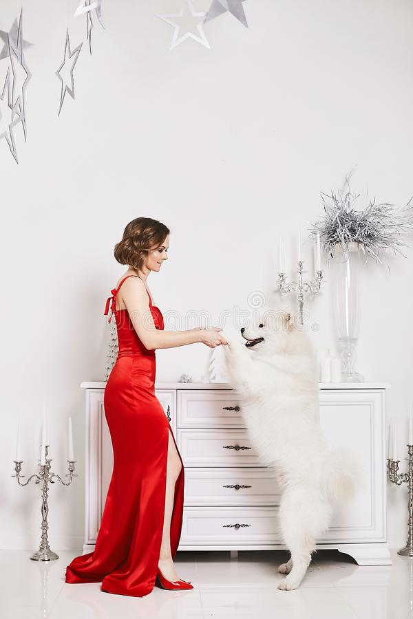 Menina bonita e 'sexy' no vestido vermelho elegante, dançando com o cão bonito neve-branco do Samoyed e levantando no branco imagens de stock