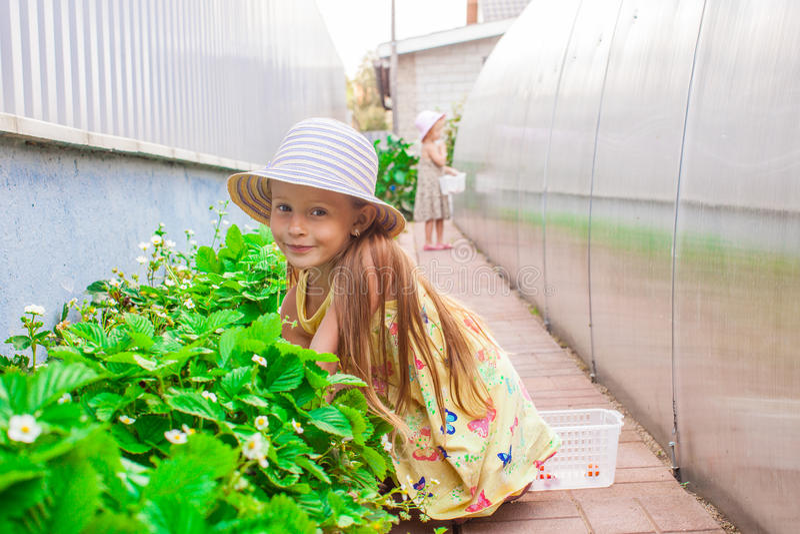 Menina bonita encantador pequena em uma estufa fotos de stock royalty free