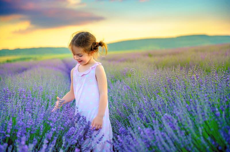 A menina bonita está escolhendo um ramalhete em uma alfazema foto de stock royalty free