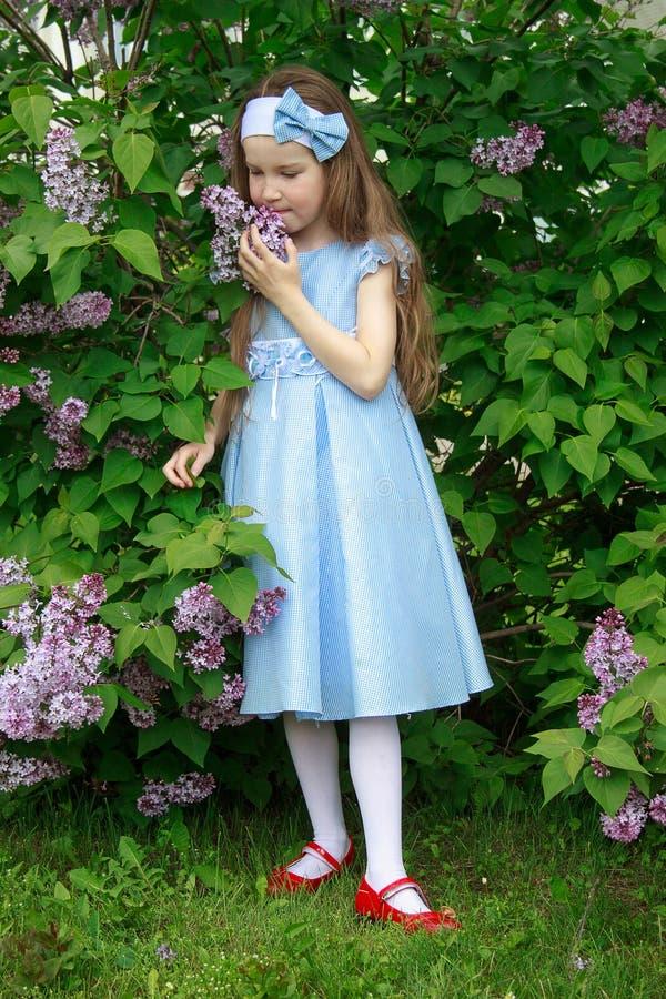A menina bonita está estando nos arbustos de um lilás imagem de stock