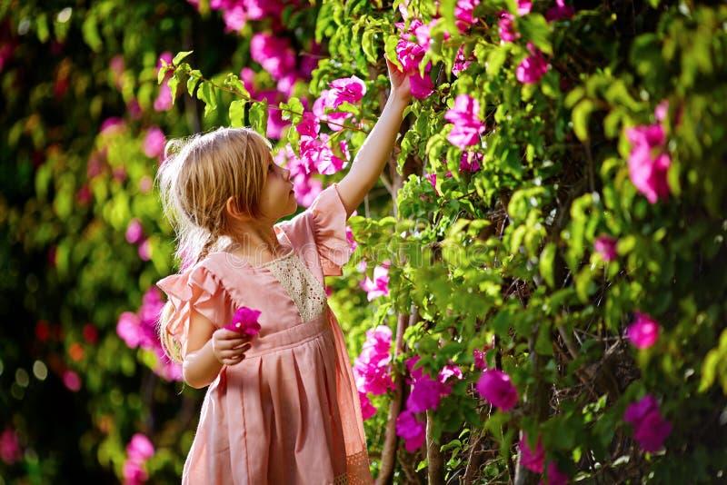 Menina bonita no vestido cor-de-rosa do encanto com tranças e a cara de sorriso no dia ensolarado de florescência da flor do rosa foto de stock