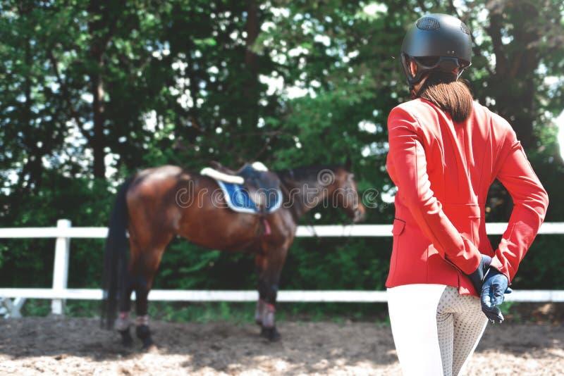 Menina bonita nova do jóquei que prepara o cavalo para o passeio Cavalos do amor backview do close-up imagens de stock