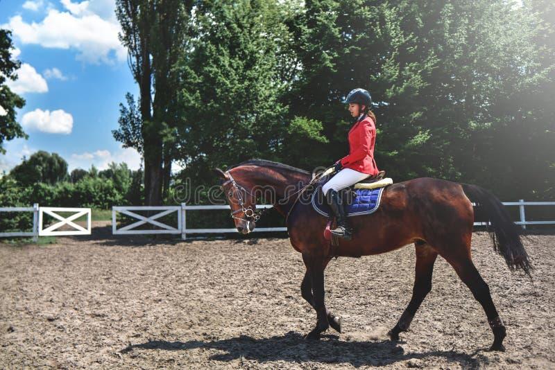 Menina bonita nova do jóquei que prepara o cavalo para o passeio Cavalos do amor Menina que monta um cavalo imagens de stock royalty free