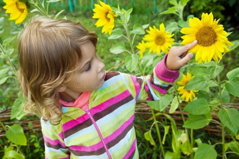 A menina bonita olha o girassol no jardim imagem de stock royalty free