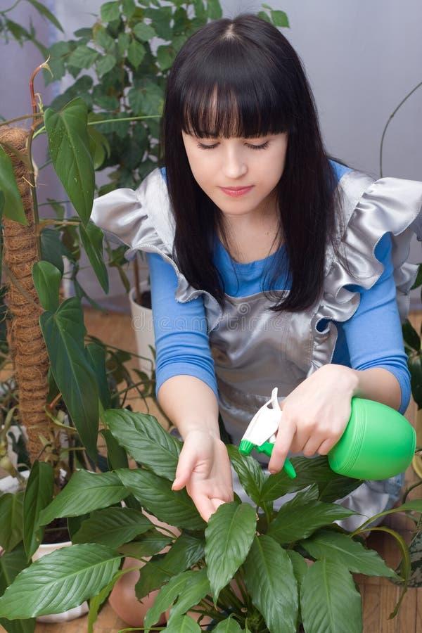 A menina bonita pulveriza plantas verdes da água fotos de stock