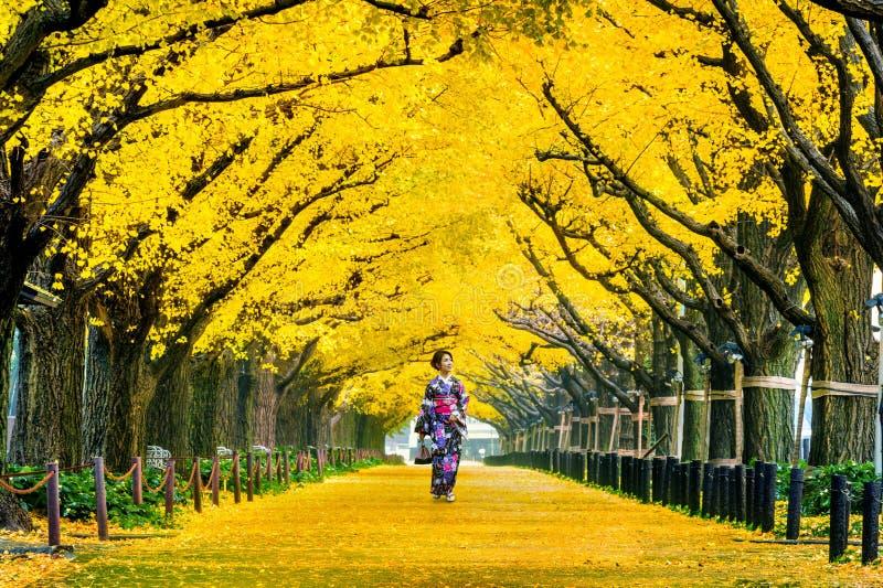 Menina bonita que veste o quimono tradicional japonês na fileira da árvore amarela da nogueira-do-Japão no outono Parque do outon imagem de stock