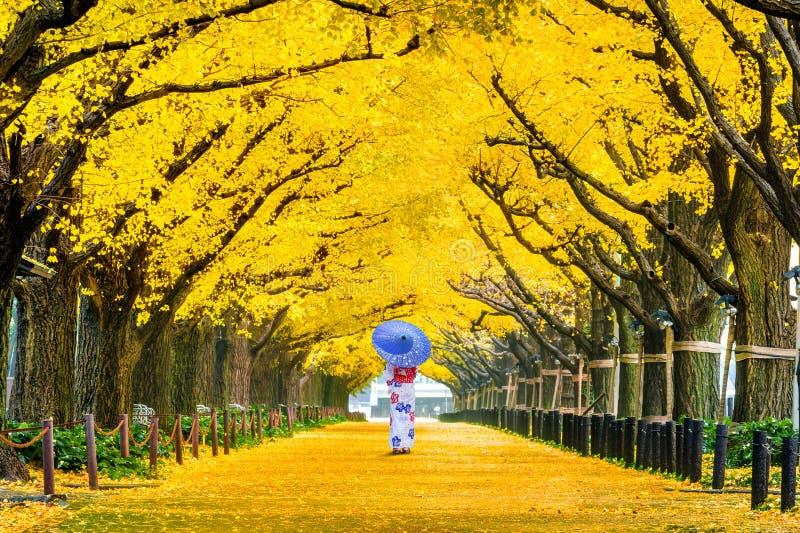 Menina bonita que veste o quimono tradicional japonês na fileira da árvore amarela da nogueira-do-Japão no outono Parque do outon fotografia de stock