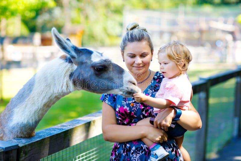A menina bonito adorável da criança e a Lama de alimentação da mãe nova no crianças cultivam Animais bonitos das trocas de caríci foto de stock